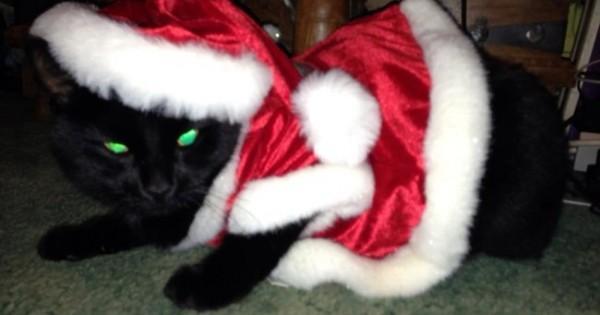 25 γάτες που απλά απεχθάνονται τα Χριστούγεννα!