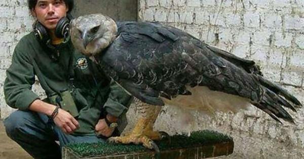 Αυτό το πουλί είναι ένα από τα μεγαλύτερα του κόσμου και κρύβει ένα ανησυχητικό μυστικό. (Εικόνες)