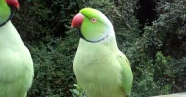 Οι παπαγάλοι ξέρουν πώς να χρησιμοποιούν «εργαλεία»