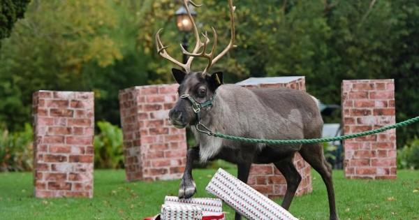 Ζωάκια από όλο τον κόσμο ανοίγουν τα χριστουγεννιάτικα δώρα τους! (Εικόνες)
