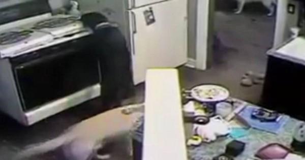 Δείτε πως ένας σκύλος έβαλε φωτιά στο σπίτι του αφεντικού του (Βίντεο)