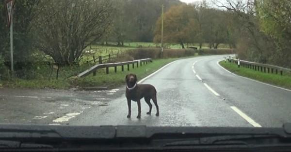 Είδε έναν σκύλο μόνο στο δρόμο, σταμάτησε το αμάξι, κατέβηκε και τότε…(Βίντεο)