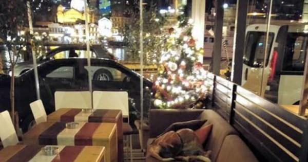 Το «ζεστό» καφέ της Λέσβου που ανοίγει τις πόρτες του στα αδέσποτα