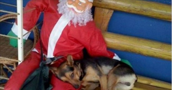Όλοι έχουν ανάγκη λίγη αγάπη – Η γλυκόπικρη χριστουγεννιάτικη φωτογραφία με τον αδέσποτο σκύλο