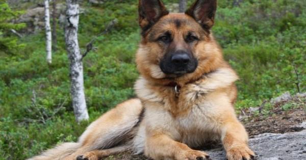 Οι σκύλοι μπορούν να νιώσουν τι υπάρχει στο μυαλό των άλλων σκύλων (Εικόνες)