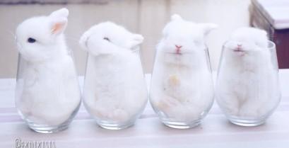 Μικρά λαγουδάκια μέσα σε ποτήρια (Βίντεο)