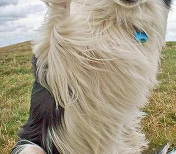 10 αξιολάτρευτα σκυλάκια που θέλουν να κάνουν high-five με εσάς! (Εικόνες)