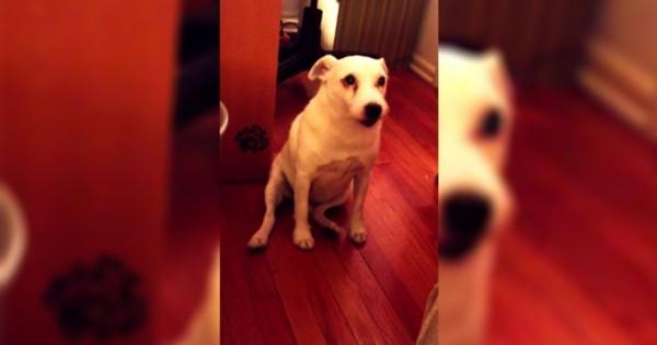 Μάλωσαν αυτό τον σκύλο γιατί ήταν άτακτος! Δείτε την ξεκαρδιστική αντίδραση του! (Βίντεο)