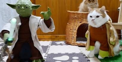 Οι γάτες Jedi εκπαιδεύονται (Βίντεο)