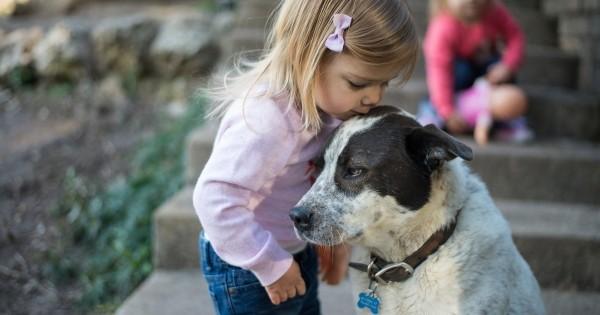 5 ράτσες σκυλιών «φιλικές» για οικογένειες με παιδιά (Εικόνες)