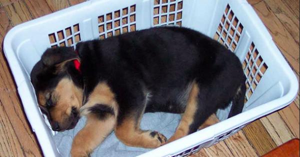 Ο σκύλος σας είναι το μωρό σας! Και δείτε τι το αποδεικνύει…(Εικόνες)