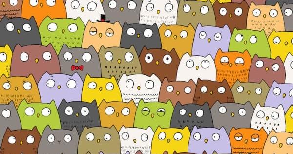 Μπορείτε να εντοπίσετε την κρυφή γάτα ανάμεσα σε αυτές τις πολύχρωμες κουκουβάγιες; (Είκονες)