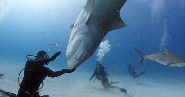 Η εντυπωσιακή… πιρουέτα του καρχαρία (Εικόνες)