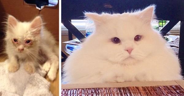 Πήραν σπίτι τους αυτή την παρατημένη γάτα και μετά από λίγο καιρό παρατήρησαν κάτι υπέροχο! (Εικόνες)