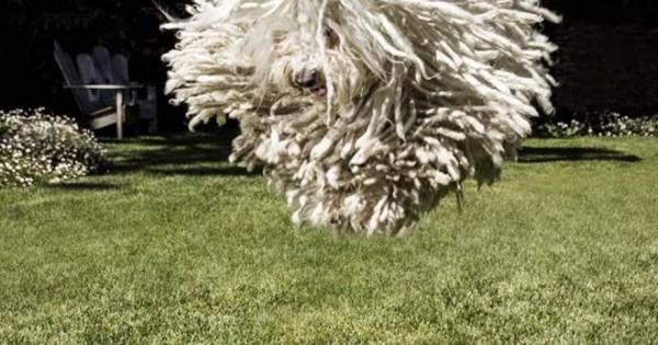Αυτός είναι ο σκύλος του Μ.Ζούκεμπεργκ (φωτο)