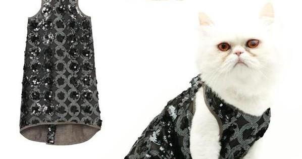 Εκπληκτικά κουστούμια για το γάτο σας! (Εικόνες)