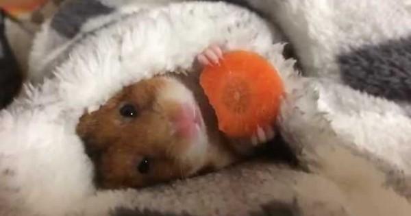 Ο Mike τρώει το καρότο του πριν κοιμηθεί… (Βίντεο)