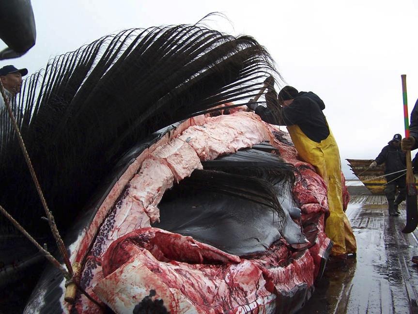φαλαινοθηρία