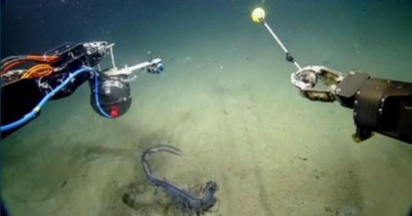 Σπάνιο πλάσμα που ζει στο βυθό του ωκεανού καταγράφεται σε κάμερα !! (Βίντεο)