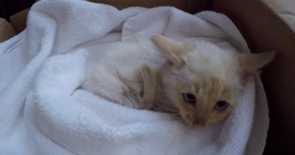 Απίστευτη η μετάλλαξη για αυτό το γατάκι που βρέθηκε μισοπεθαμένο…(Βίντεο)