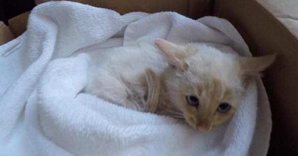 Λάζαρος, το γατί που γύρισε από το χιόνι (Εικόνες)