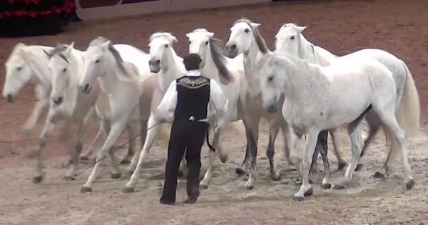 Έφιππος καλλιτέχνης εκτελεί νούμερο με άλογα και αφήνει το πλήθος άφωνο