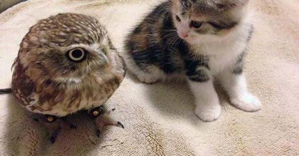 Γατάκι και κουκουβάγια: Μια αξιολάτρευτη φιλία (Εικόνες)
