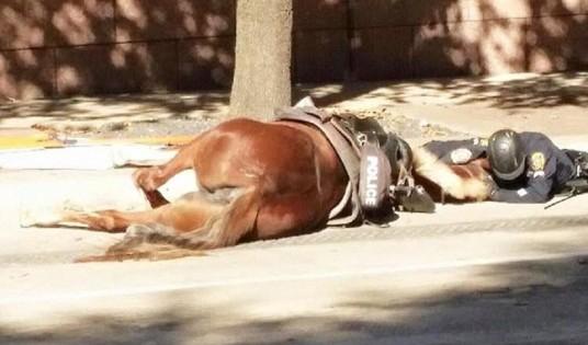 Θα σε κάνει να δακρύσεις! Αστυνομικός αγκαλιάζει το νεκρό άλογό του