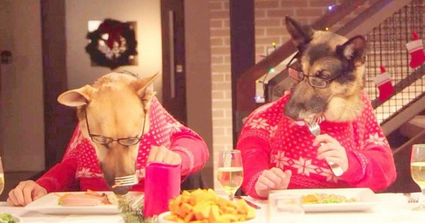 Κάλεσαν 13 Σκύλους και 1 Γάτα για Φαγητό. Οι τρόποι τους, θα σας Κάνουν να δακρύσετε. (Βίντεο)