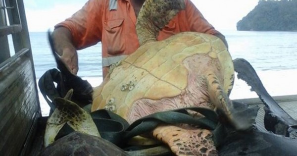 Η χελώνα αυτή ήταν για πώληση. Δείτε τι έκανε αυτός που την αγόρασε! Υπέροχο! (Εικόνες)
