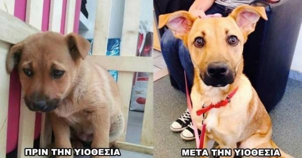 Βοήθησε κι εσύ τα αδέσποτα σκυλιά να αποκτήσουν το δικό τους σπίτι. (Βίντεο)