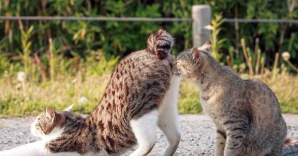 Γάτες που φωτογραφήθηκαν την κατάλληλη στιγμή (Εικόνες)