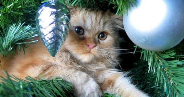 Γάτες VS Χριστουγεννιάτικα Δέντρα: έχει κηρυχθεί πόλεμος! (Φωτογραφίες)