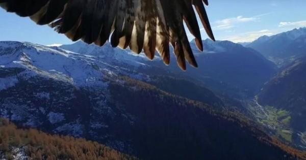 Δύο αετοί αρπάζουν drone στον αέρα σαν να ήταν ένα πουλί [βίντεο]