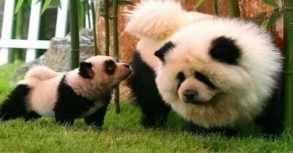 15 Ζώα που είναι Μανούλες στις Μεταμφιέσεις. (Εικόνες)