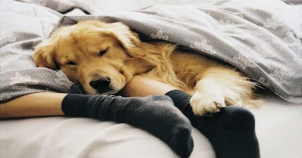 Στους περισσότερους ιδιοκτήτες αρέσει να κοιμούνται με το σκύλο ή τη γάτα στο κρεβάτι τους