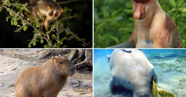 Δέκα άγνωστα ζώα πολύ παράξενα και άκρως ενδιαφέροντα (Εικόνες)