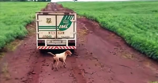 Γι αυτό είναι μοναδικό ζώο ο σκύλος… Θα ραγίσει η καρδιά σας με την ιστορία αυτών των 2 σκύλων (Βίντεο)