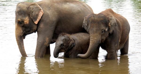 Νομίζετε ότι 9 μήνες εγκυμοσύνης είναι πολλοί; Δείτε πόσους μήνες εγκυμονούν αυτά τα ζώα! (Εικόνες)