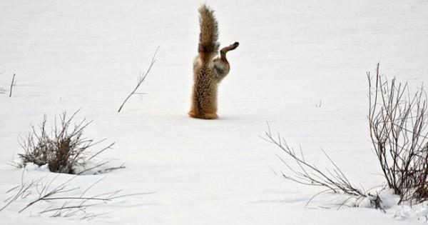 Αυτές οι φωτογραφίες θα σας κάνουν να ερωτευθείτε τις αλεπούδες!
