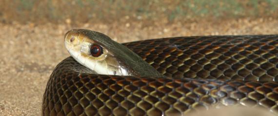 10 επικίνδυνα πλάσματα της αυστραλιανής γης (και θάλασσας) (Βίντεο)