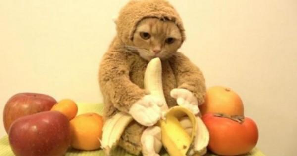Τον γύρo του διαδικτύου κάνει η γάτα ντυμένη μαϊμού που τρώει μια μπανάνα. (Βίντεο)
