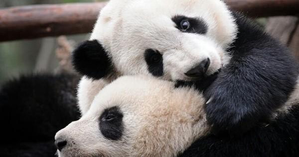 10 ζώα που αποδεικνύουν ότι η αγάπη δεν έχει όρια!