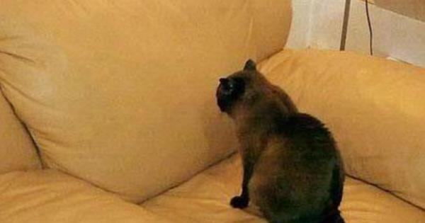 19 αλήθειες που μόνο όσοι έχουν γάτες θα καταλάβουν (Φωτογραφίες)