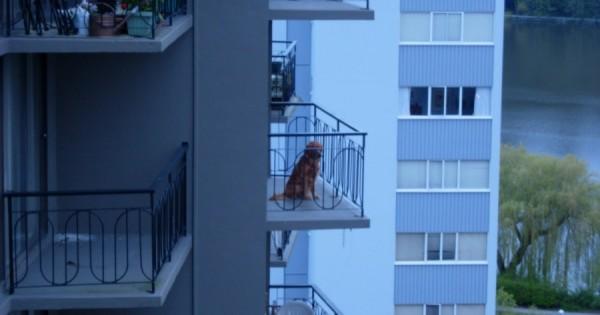 Τι κάνουμε, όταν βλέπουμε ένα σκύλο συνέχεια στο μπαλκόνι,δεμένο ή όχι , μέσα σε ακαθαρσίες και γενικά σε κακές συνθήκες διαβίωσης;