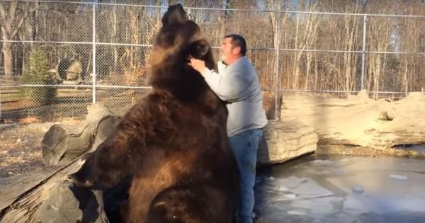 Γιγαντιαία αρκούδα απολαμβάνει τα χάδια και παίζει σαν κουτάβι (Βίντεο)