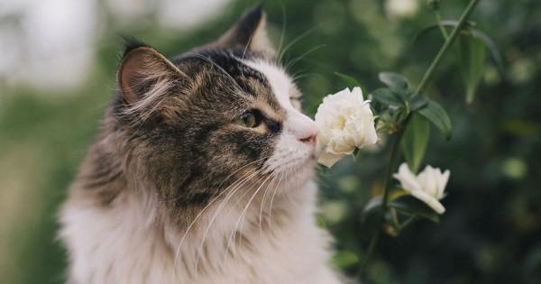 50 υπέροχες φωτογραφίες με ζώα που μυρίζουν λουλούδια.