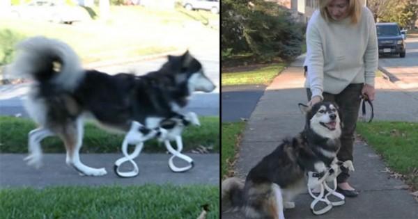 Και όμως! Έφτιαξε με 3D εκτυπωτή προσθετικά πόδια για το σκύλο της! (Βίντεο)
