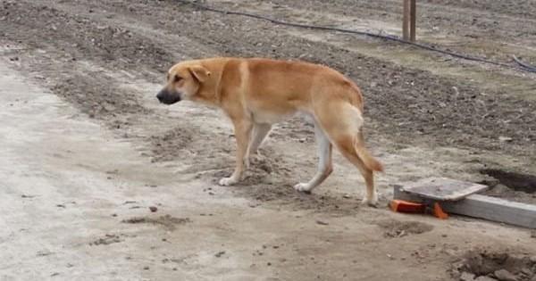 Διασώστρια γράφει γράμμα στον άνθρωπο που εγκατέλειψε τον σκύλο του και αυτό γίνεται κατευθείαν viral. (Βίντεο)