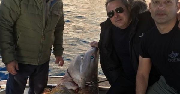 Οργή WWF για τον «μεγαλοκαρχαρία» του Πάνου Καμμένου (Εικόνες)